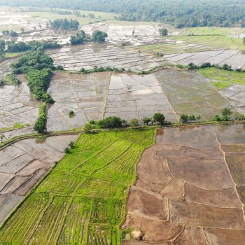 Sri Lanka's rice fields